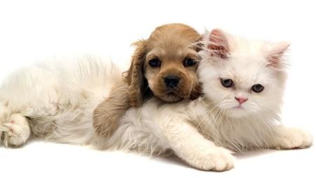 gato-cachorro