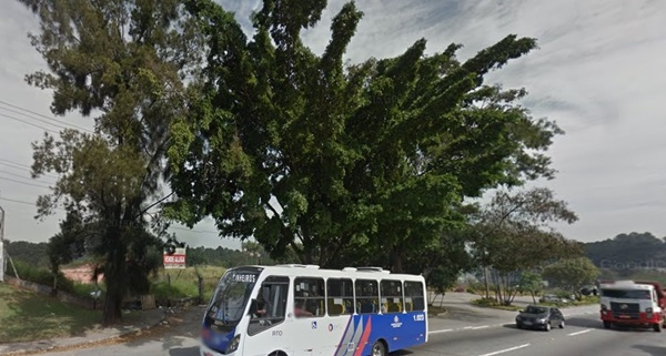 Imagem do Google mostram as árvores antes do corte