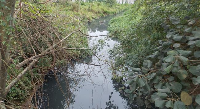 Semana da Água: Cotia tem dois rios em estado ruim, diz SOS Mata Atlântica