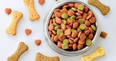 Ipem encontra irregularidades em 17% de produtos veterinários