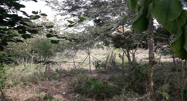 Moradora denuncia invasão de terra e queimadas em área de mata em Cotia