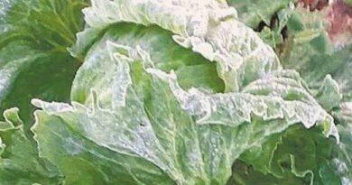 Madrugadas frias já refletem na produção agrícola na região