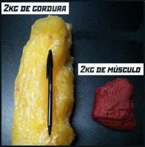 gordura