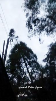 Árvore sobre fiação