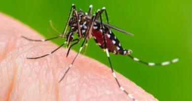 Além do coronavírus, SP vive surto de chikungunya. Cotia não teve casos