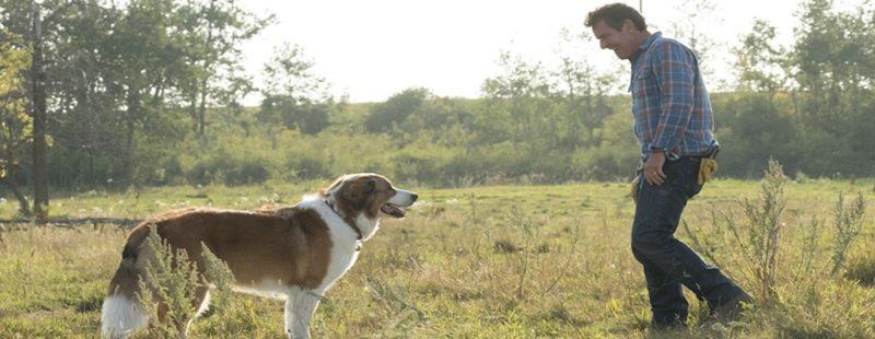 """Cão vive gerações protegendo a família em """"Juntos para Sempre"""""""