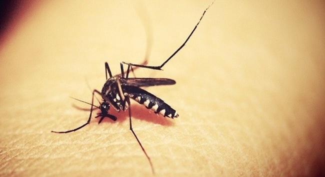 Após ficar bimestre sem casos de dengue, Cotia registrou dois novos no último mês